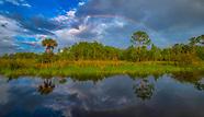 Florida Rainbows