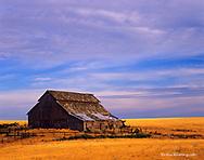 Old barn in wheat country near Wilbur Washington
