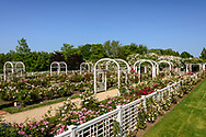 Roses, Three Ponds Farm, Scuttle Hole Rd, Water Mill, Long Island, New York