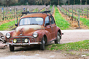 View over the vineyard with vineyard workers pruning and in the foreground an old rusty red collectors car Morris Minor from the 1950s 50s Bodega Vinos Finos H Stagnari Winery, La Puebla, La Paz, Canelones, Montevideo, Uruguay, South America