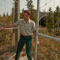 A park ranger closes a gate in extensive fencing near a wildlife overpass that enables animals to safely cross the Trans-Canada Highway in Banff National Park, Alberta, Canada.
