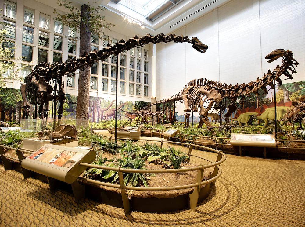 Dinosaur Hall at the Carnegie Mellon Natural History Museum, Pittsburgh, USA