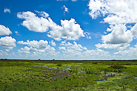 Environmentally sensitive wetlands in Southwest Florida.