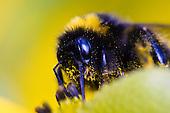 Bugs & Flowers