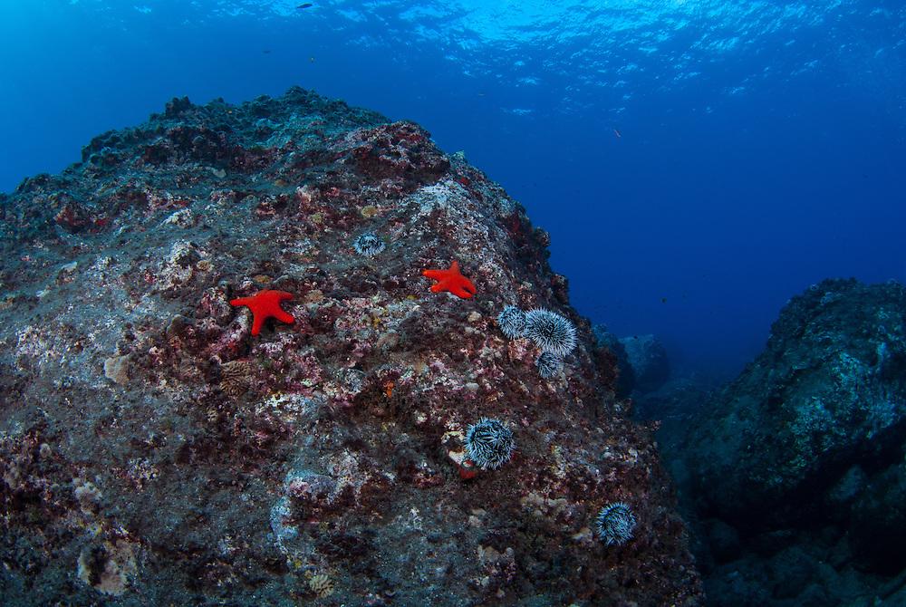 Kermadecs Marine Reserve, Unknown Starfish