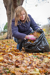 Making leaf mould using a bin bag - gathering leaves