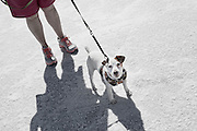 Image of a spectator and dog at the Bonneville Salt Flats, Utah, American Southwest by Randy Wells