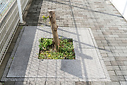 cut down sidewalk public space tree