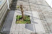 cut down sidewalk public space tree