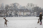 A pet dog enjoys catching snowballs in Ruskin Park, south London during the bad weather covering every part of the UK and known as the Beast from the East because Siberian winds and very low temperatures have blown across western Europe from Russia, on 1st March 2018, in Lambeth, London, England.