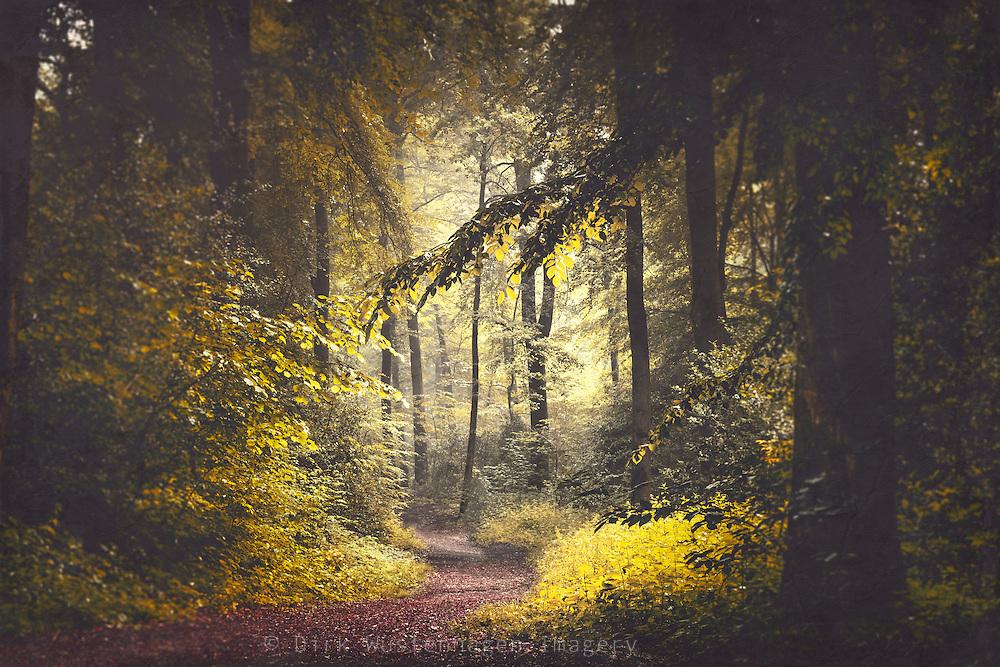Summer morning in a beech tree forest<br /> Society6 stuff: http://bit.ly/2kGqaKi