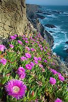 Sea landscape in Cabo Sardão, Southwest Alentejo and Vicentine Coast Natural Park, Portugal