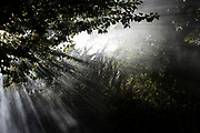 Smoke for a fire making shafts of light through trees and bushes in Birmingham, United Kingdom.