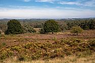 view from the Telegraphen hill in the Wahner Heath, Troisdorf, North Rhine-Westphalia, Germany.<br /> <br /> Blick vom Telegraphenberg in der Wahner Heide, Troisdorf, Nordrhein-Westfalen, Deutschland.