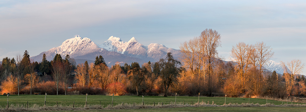 Sunset creates a glow in the trees along the Fraser River in front of the Golden Ears (Mount Blanshard).  Photographed from Derby Reach Regional Park at Meunch Bar in Langley, British Columbia, Canada.