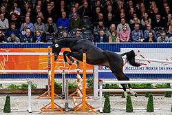 134, Mendoza VDL<br /> KWPN hengstenkeuring - 's Hertogenbosch 2020<br /> © Hippo Foto - Dirk Caremans<br />  30/01/2020