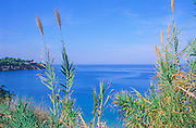 Blue Mediterranean sea coastal view through grassy vegetation, Sicily, Italy