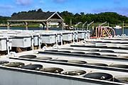 Cherrystone aqua farm hatchery tanks produce clam and oyster products, Cheriton, Virginia, USA