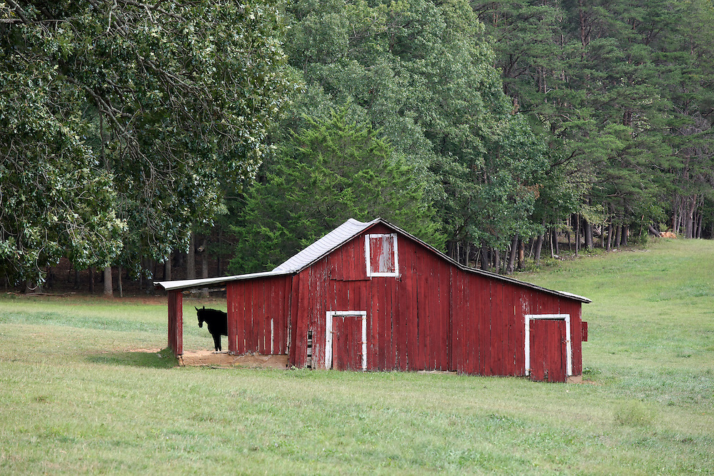 A horse under a barn in Nelson County, VA.