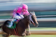 November 3, 2018: Breeders' Cup Horse Racing World Championships