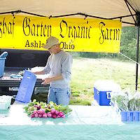An organic farmer stacks freshly harvested turnips on his table.