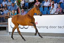 029 - Hilde Balia SMH<br /> KWPN Paardendagen - Ermelo 2012<br /> © Dirk Caremans