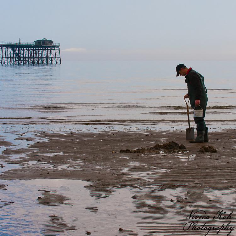 Man digging for lugworm (fishing bait) on the beach, Ramsey, Isle of Man.