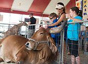 Cal, 9, Angie and Ava Weedon, 12, meet Joe, an Indu Brazillian Zebu at the Teton County Fair on Saturday.