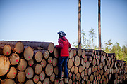 A man is climbing up on stored and cut trees at the Taunus forest which is a mountain range in Hessen, Germany, located north of Frankfurt.