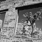 Joshua Tree Old Brick Structure Window View - Black & White