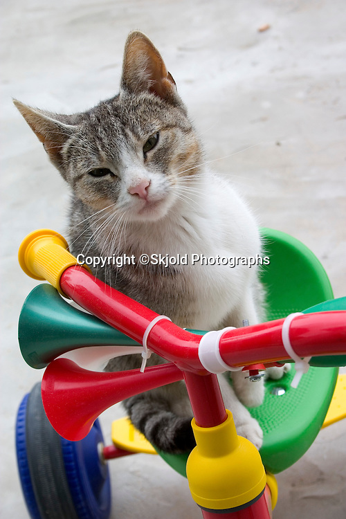 Close up of cat sitting on multicolored tricycle.  Zawady   Central Poland