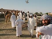 Men gather at the camel Market in Al Ain city.
