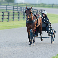 Harness Racing 2014 - Gallery 01