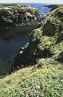 Looking at the ocean from the Mendocino Headlands, Mendocino, California