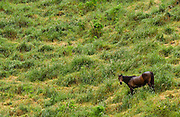 Descending horse in landscape, North Island, New Zealand