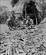 Karamajong boys tending whole corns on the cob drying in the sun in a traditional tribal compound. Karamajong of Karamoja, Uganda 1980