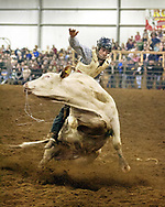 A rider at the Sundance Arena Rodeo in Fredonia, PA tries to hold to a bull during his turn in the ring.