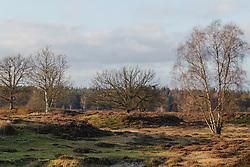 De Stulp, Lage Vuursche, Baarn, Netherlands