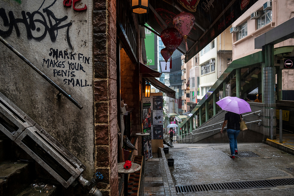 """Hong Kong - August 25, 2019: On a rainy day beside the Mid-Levels escalators on Hong Kong Island, a woman with an umbrella walks past graffiti that reads, """"Shark fin makes your penis small."""""""