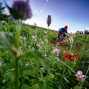 Andrew Whiteford riding Singletrack and flowers during the summer months in the Tetons.