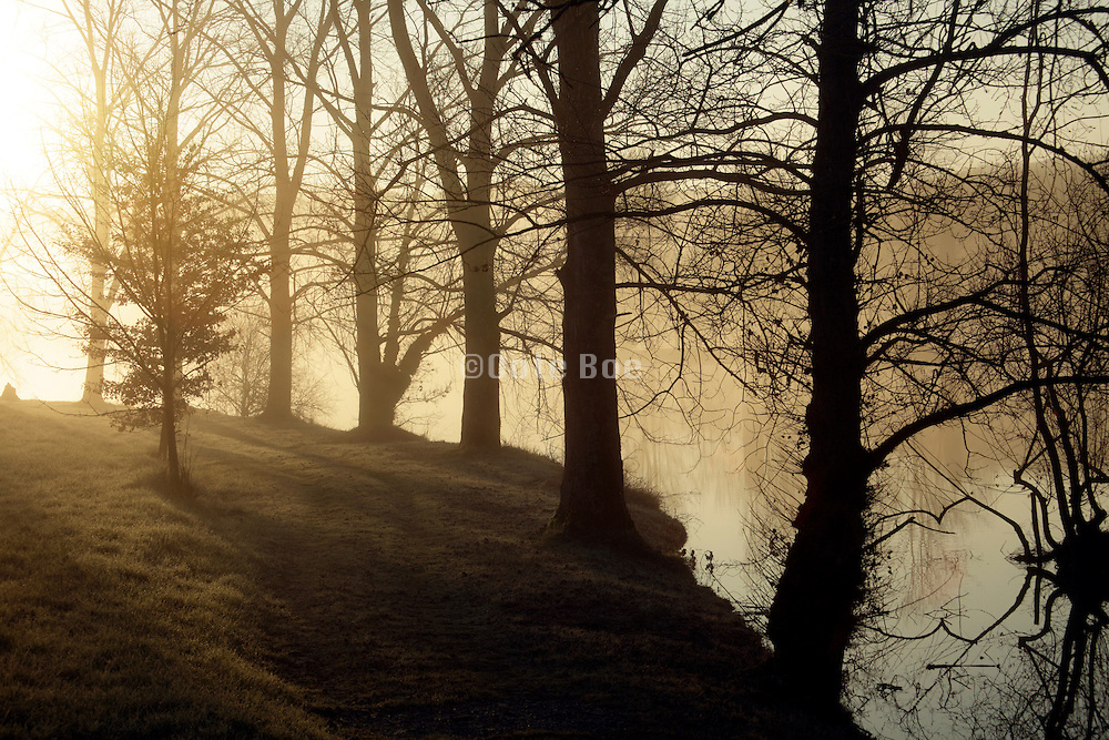 fog with trees by a lake