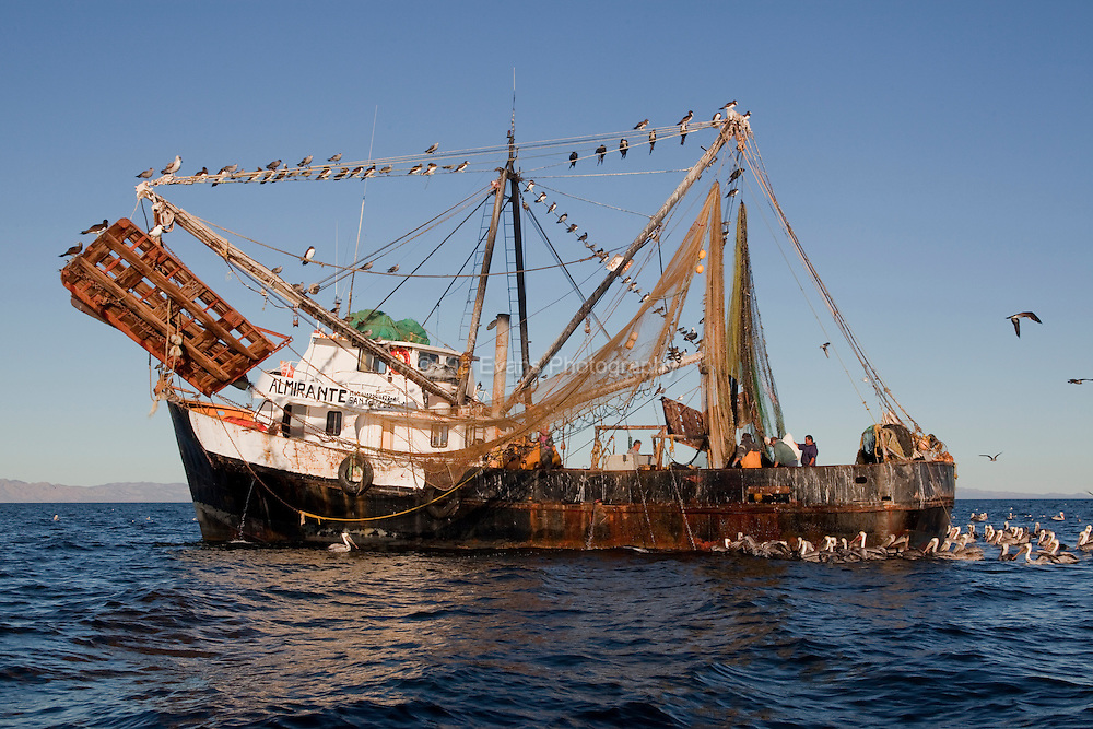A Mexican shrimp trawler fishing in Kino Bay, Mexico.