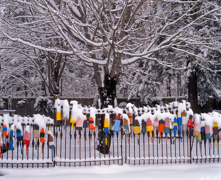 Snow covered lobster buoys, painted in bright colors, hanging on metal fence, snow covered trees, Wiscasset, ME