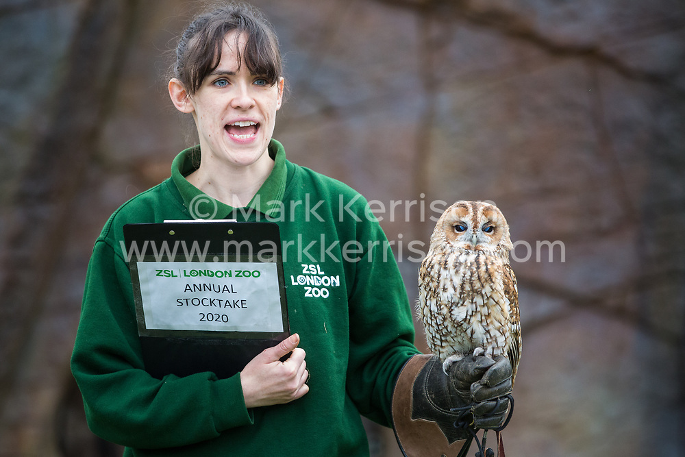 London, UK. 2 January, 2020. A keeper displays Alberta, a tawny owl, during the annual stocktake at ZSL London Zoo. Every mammal, bird, reptile, fish and invertebrate is counted - a total of more than 500 different species - as part of an almost week-long audit required by the Zoo's licence, with the information recorded then shared with other zoos via the Species360 database.