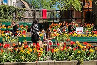 Tulips at Mosebacke Square in Södermalm