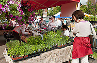 Audrey Roberge of Surowiec Farm displays a wide selection of produce and plants to sell at the Laconia Main Street Outdoor Market Place downtown Thursday afternoon.  (Karen Bobotas/for the Laconia Daily Sun)