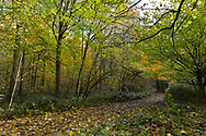 Autumn colours in Stoke Wood, Oxfordshire.