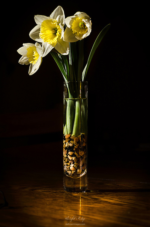 Daffodils in a glass vase bring a bit of Spring into the house.