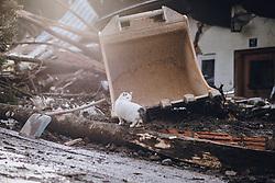 THEMENBILD - eine Katze bei einer Hausruine auf die eine Mure niedergegangen ist, aufgenommen am 19. November 2019 in Bad Gastein. Die extremen Schneefälle und der Starkregen der vergangenen Tage sorgen in Teilen Österreichs für massive Gefahren und Behinderungen // a cat at a destroyed house on which a mudslide has hit. The extreme snowfalls and Heavy Rain of the past few days cause massive dangers and disabilities in parts of Austria, Bad Gastein on 19/11/19. EXPA Pictures © 2019, PhotoCredit: EXPA/ JFK