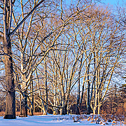 The sun is setting over Duke Farms, Hillsborough, NJ after winter storm.  The bark on the bare trees captures the many shades of light cast by the setting sun and creates wonderful shadows in the process.  This is a slightly different treatment that brings out some different colors.